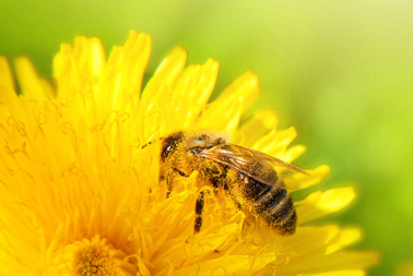 Nachhaltigkeit bei honigplus