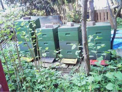Wie Ingmar zu den Bienen kam