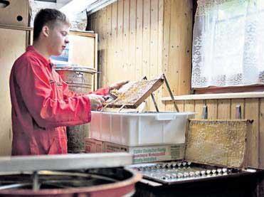 Ingmar beim Ernten des frischen Honigs