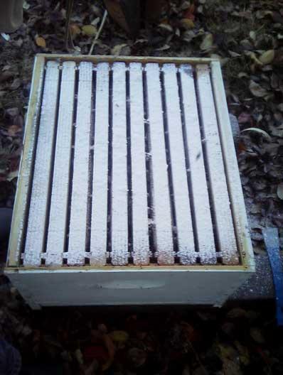 Behandlung der Bienen mit Puderzucker gegen die Varia-Milbe