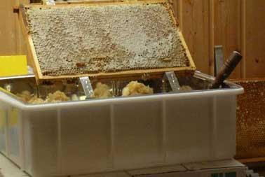 Honigwabe beim Entdeckeln
