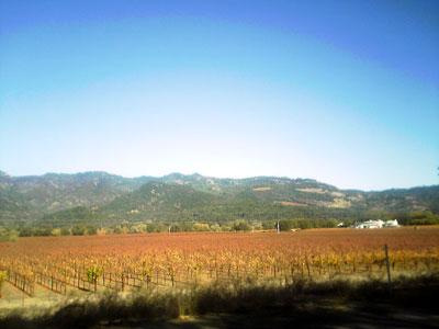 Central Valley Kalifornien Bienen
