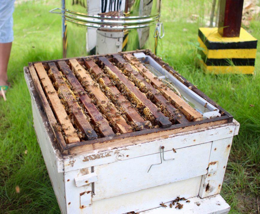 Wieso gibt es weltweit nur kaltgeschleuderten Honig?