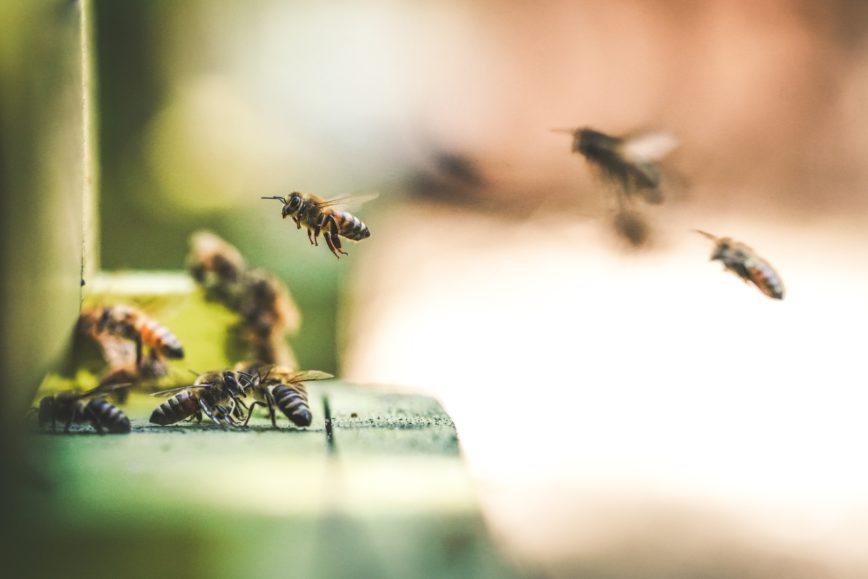 Honig Desensibilisierung gegen Pollenallergie & Heuschnupfen