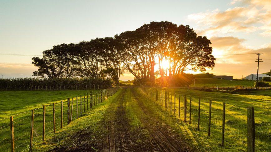 Manuka Honig – Ein Naturprodukt mit großartiker Heilwirkung