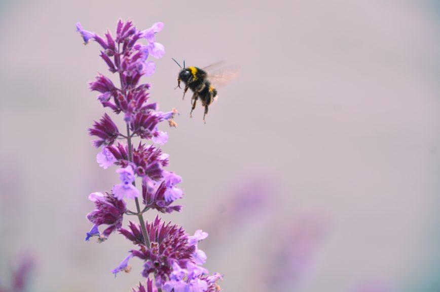 Bienensterben? So kannst du helfen…